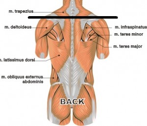 backchestmuscles
