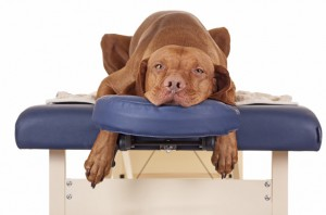 massage-for-dogs-2